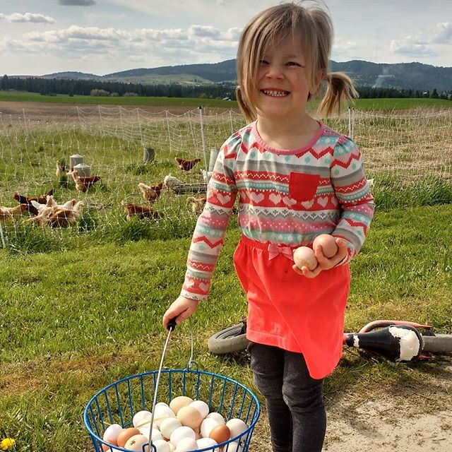 Ruthie asked if she could collect the eggs today on her own. So she rode her bike out, but she didn't have shoes on, so dad had to carry her lest she get poop on her feet in the eggmobile. We're learning a day at a time.  #abundantfamilypastures #localfarm #regenerativefarming #connectwithyourfarmer #connectwithyourfood #spokanefarming #pasturefarming #knowyourfarmer #knowyourfood #spokanefood #pasturedeggs #localhens #commumityfarming #familyfarm #realfood