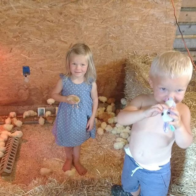 Baby chicks never get old. Watch where you step honey. 🐥  #abundantfamilypastures #localfarm #regenerativefarming #connectwithyourfarmer #connectwithyourfood #spokanefarming #pasturefarming #knowyourfarmer #knowyourfood #spokanefood #pasturedeggs #localhens #commumityfarming #familyfarm #realfood #paleo