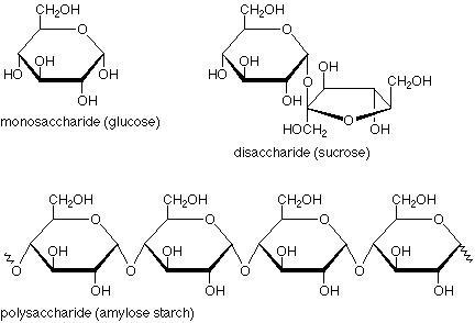 saccharides.jpg