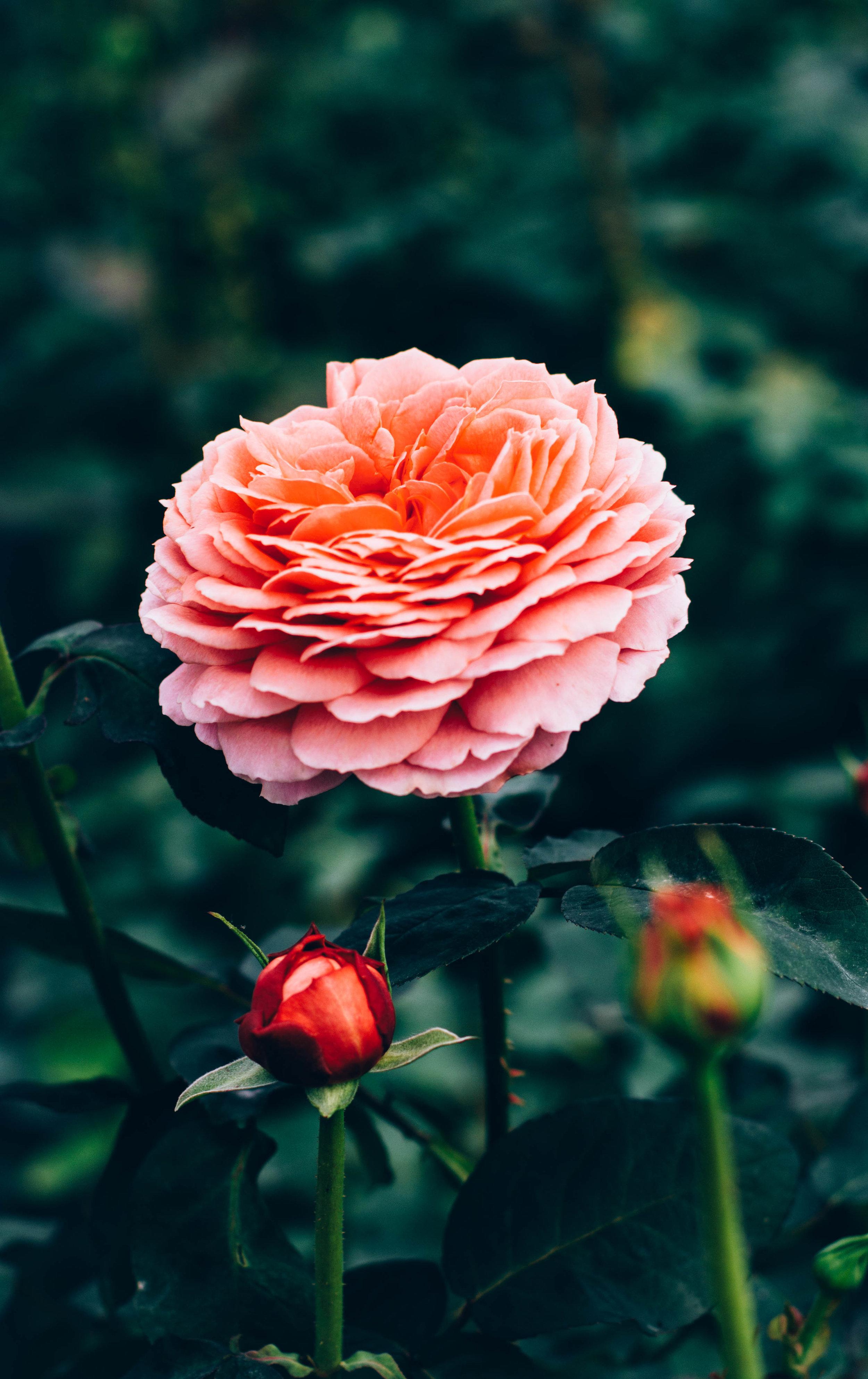 Real Flower Co 2.jpg
