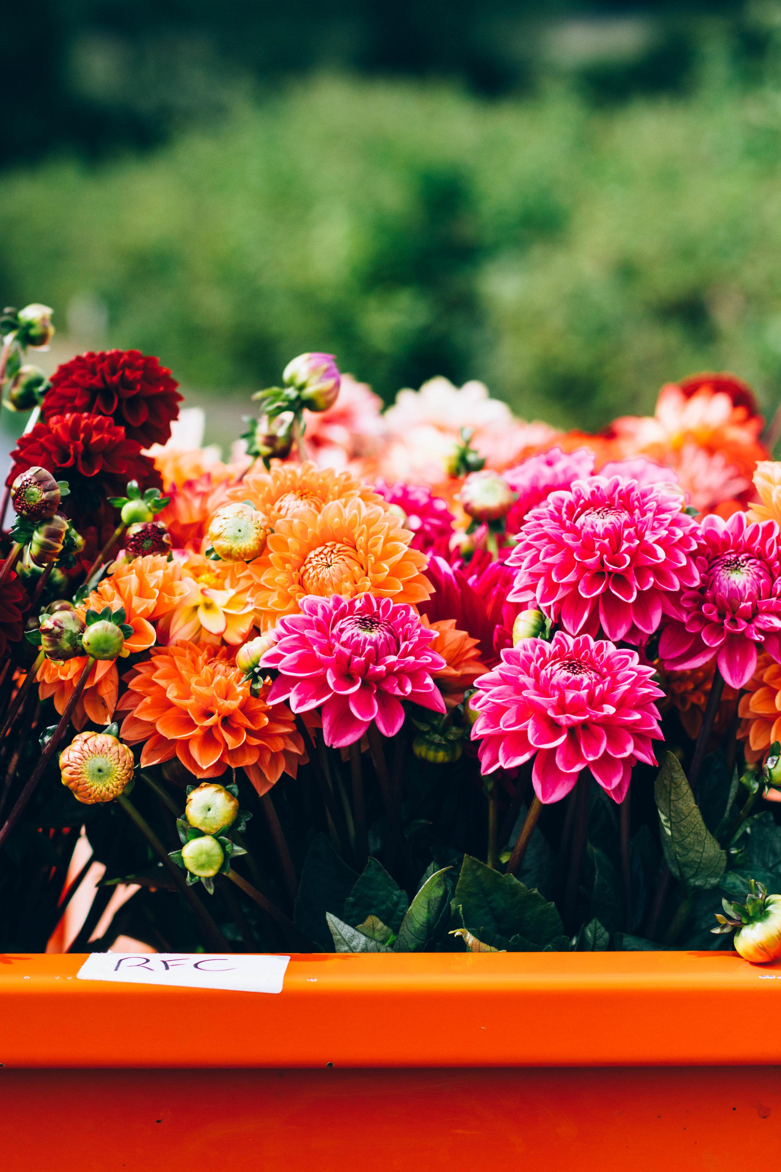 Real Flower Co 1.jpg