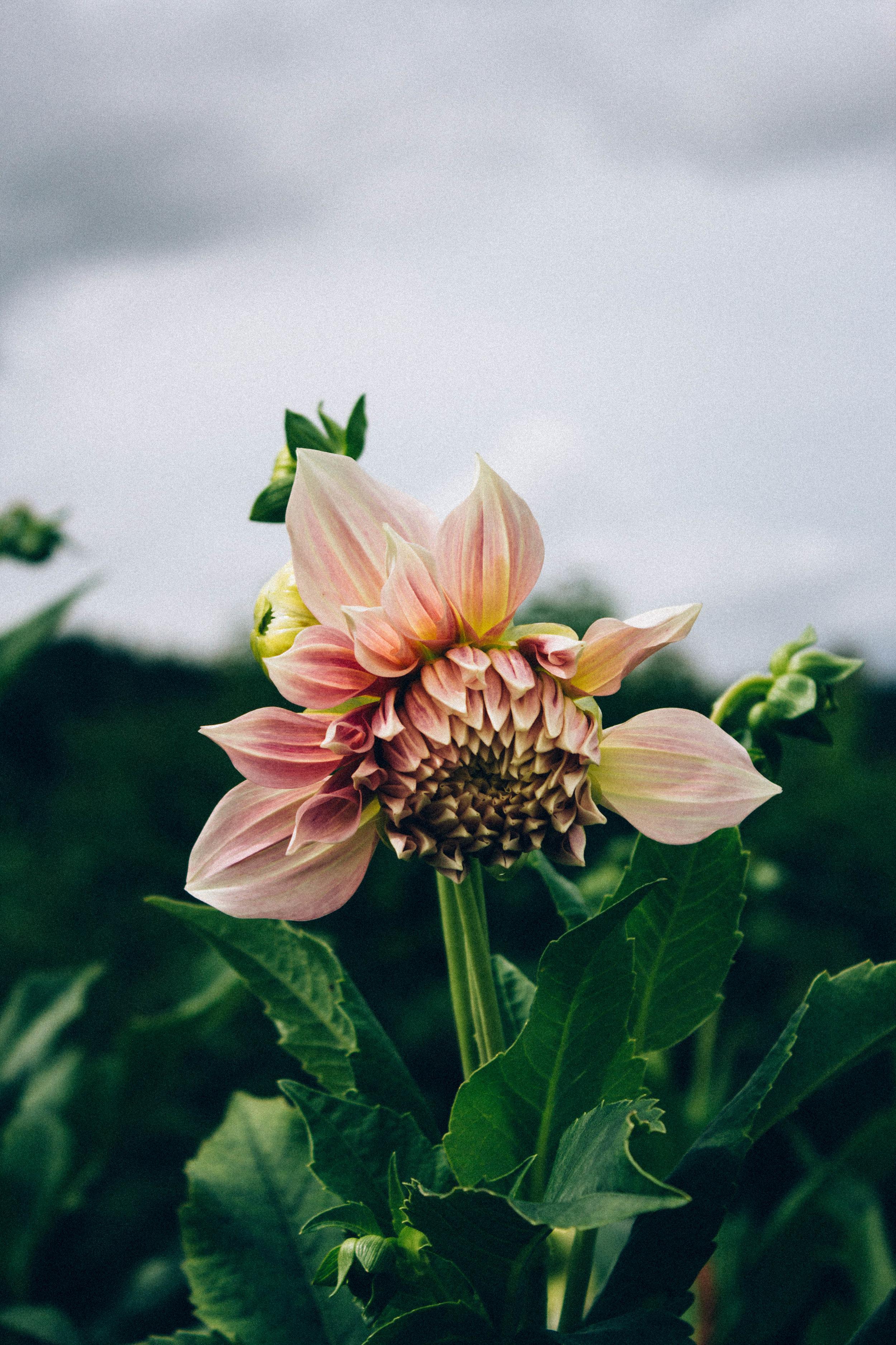 Real Flower Co 5.jpg