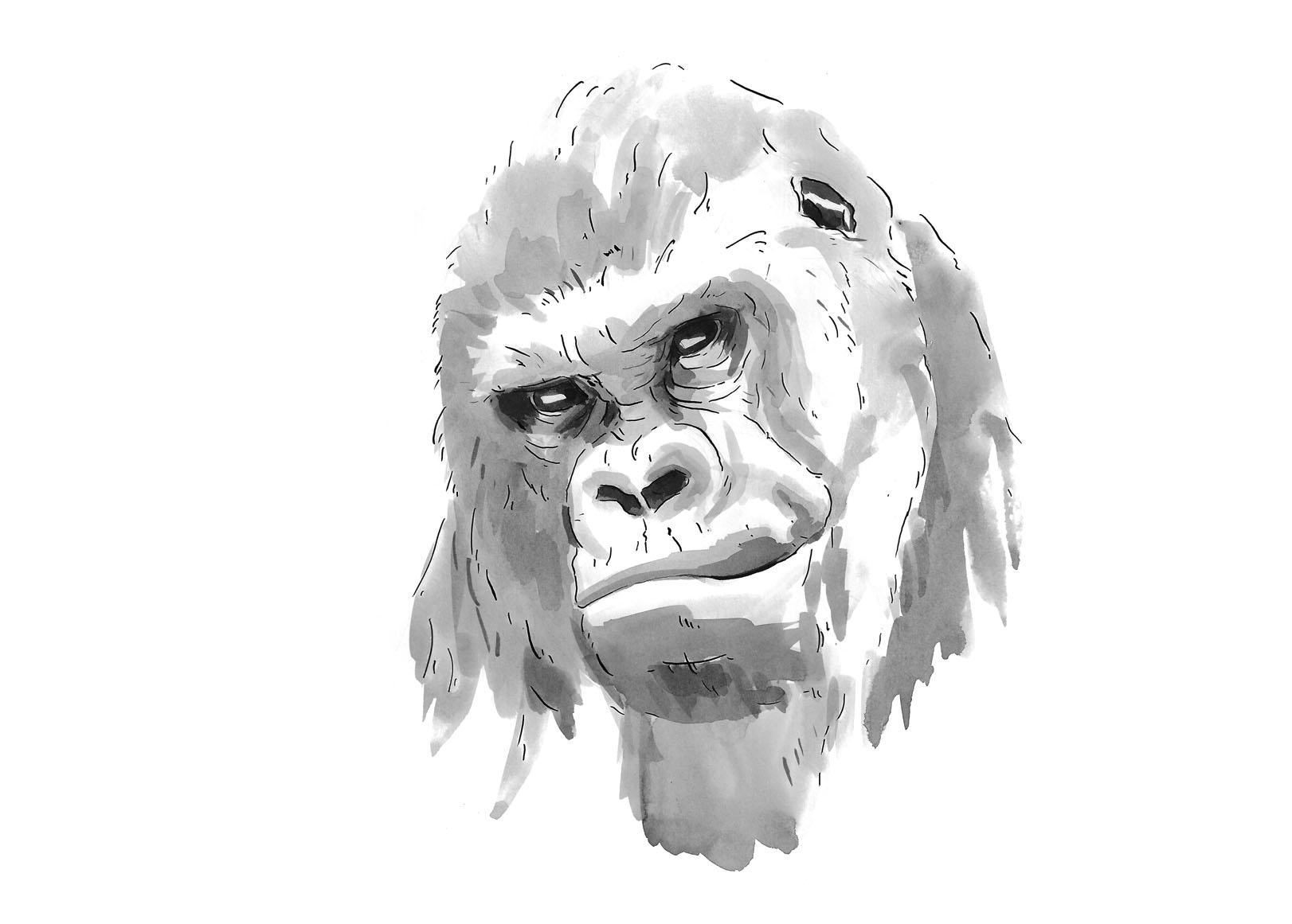 project_gorilla_october_72_no_resample.jpg