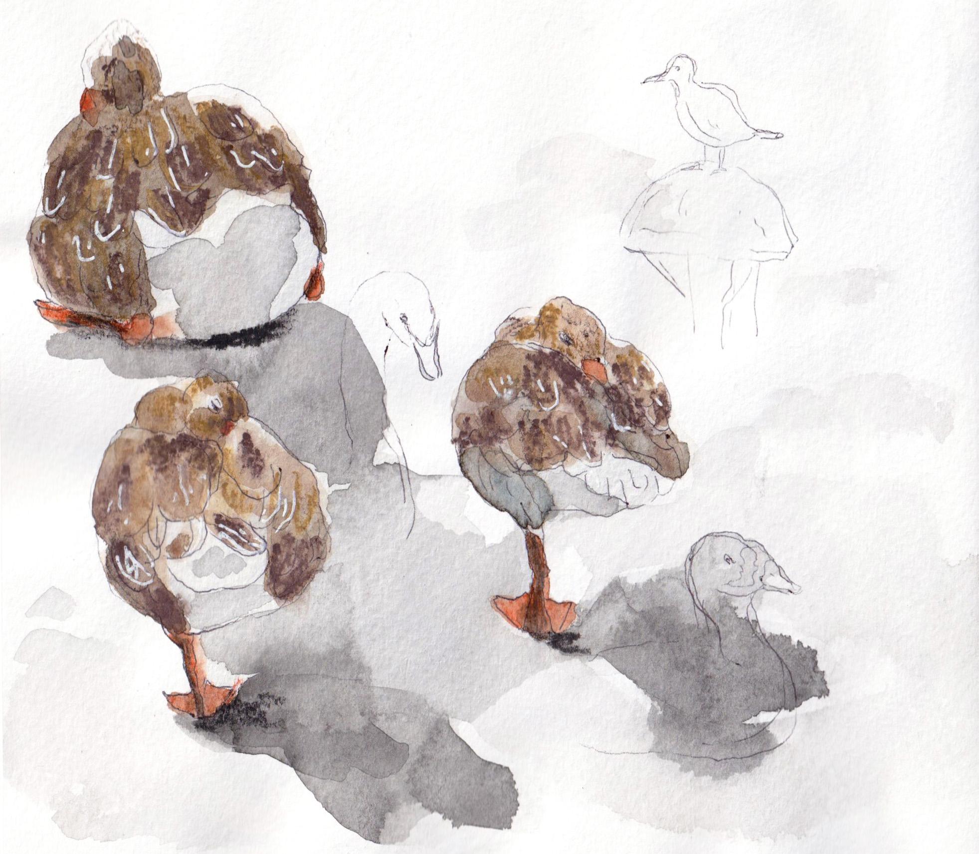 bird_portfolio.jpg