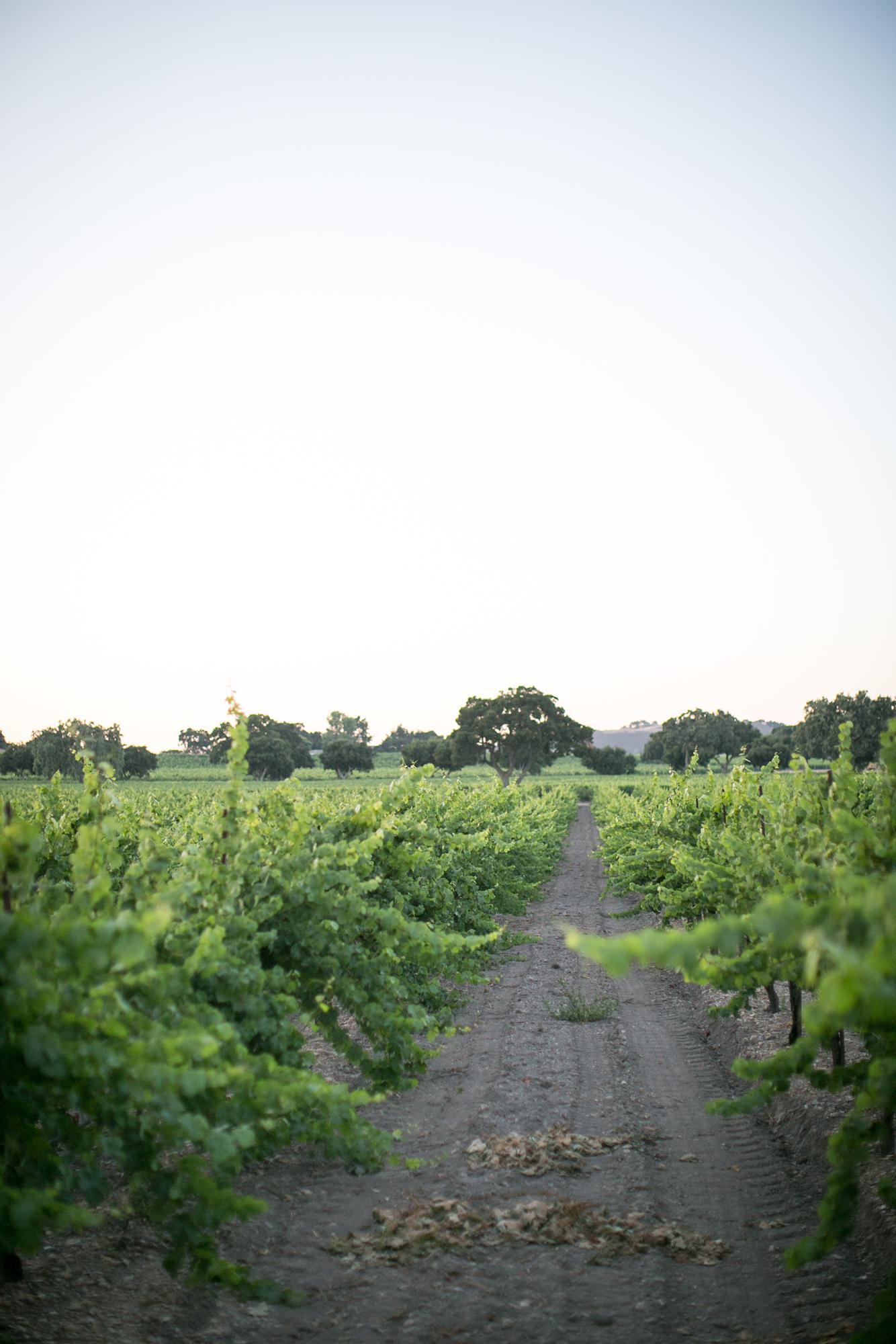 firestone-winery-wedding-MR-60.jpg