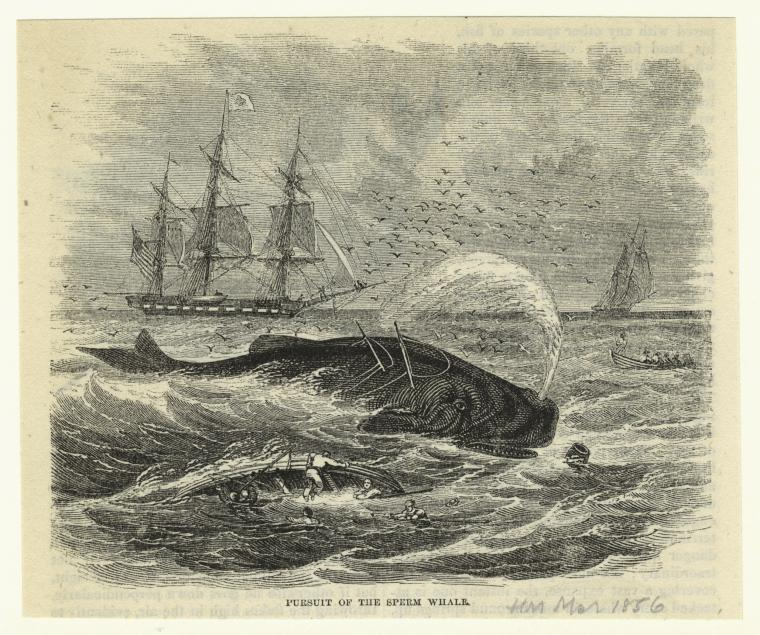 """Art and Picture Collection, The New York Public Library. """"Pursuit of the sperm whale.""""   The New York Public Library Digital Collections .  1856."""