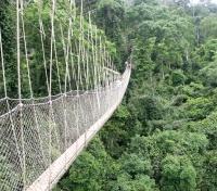 Ghana Kakum_canopy walk.jpg
