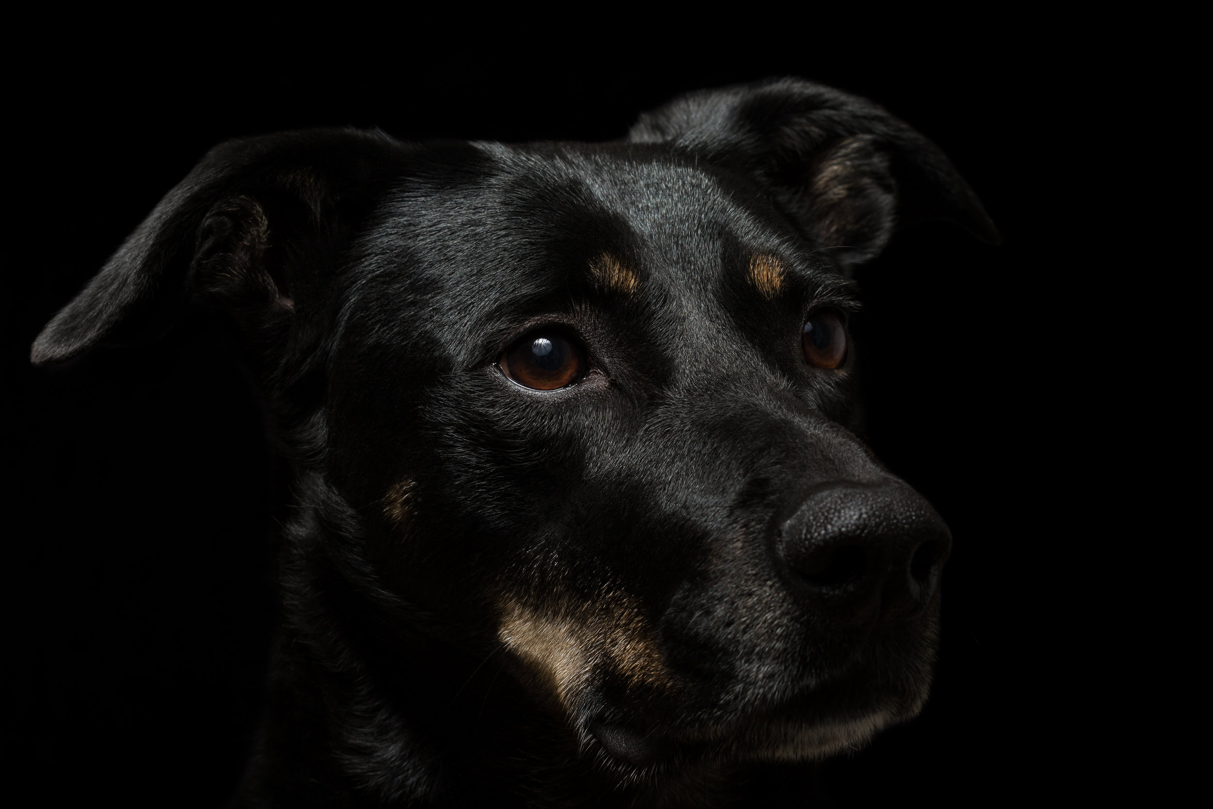 2016-01-16_Animali_49-Edit.jpg