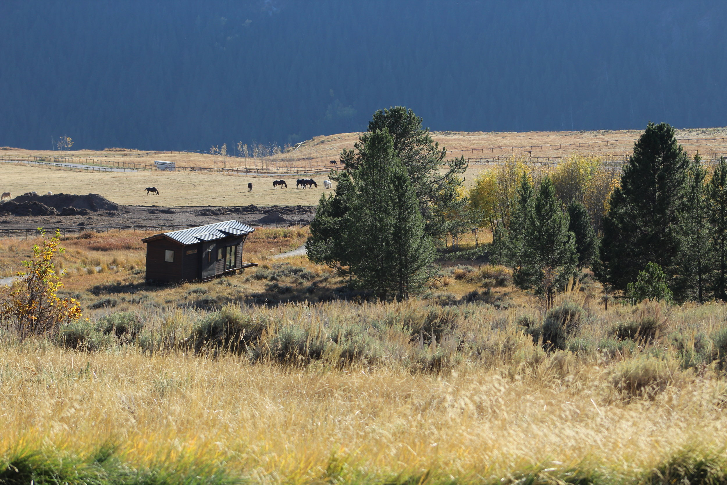 Enjoy the beautiful nature of Jackson Hole, WY