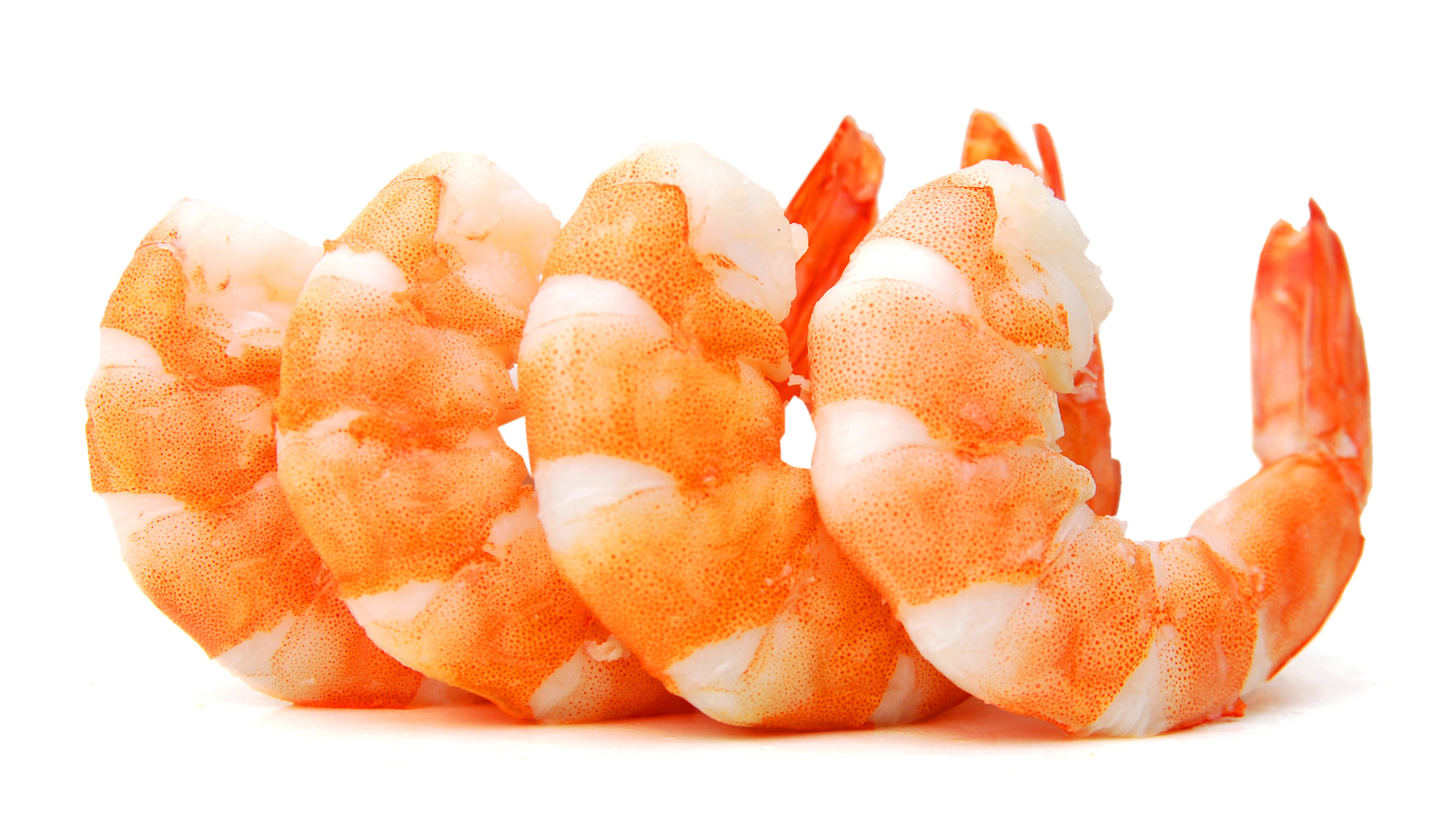 jumboshrimp_skinnyfat.jpg