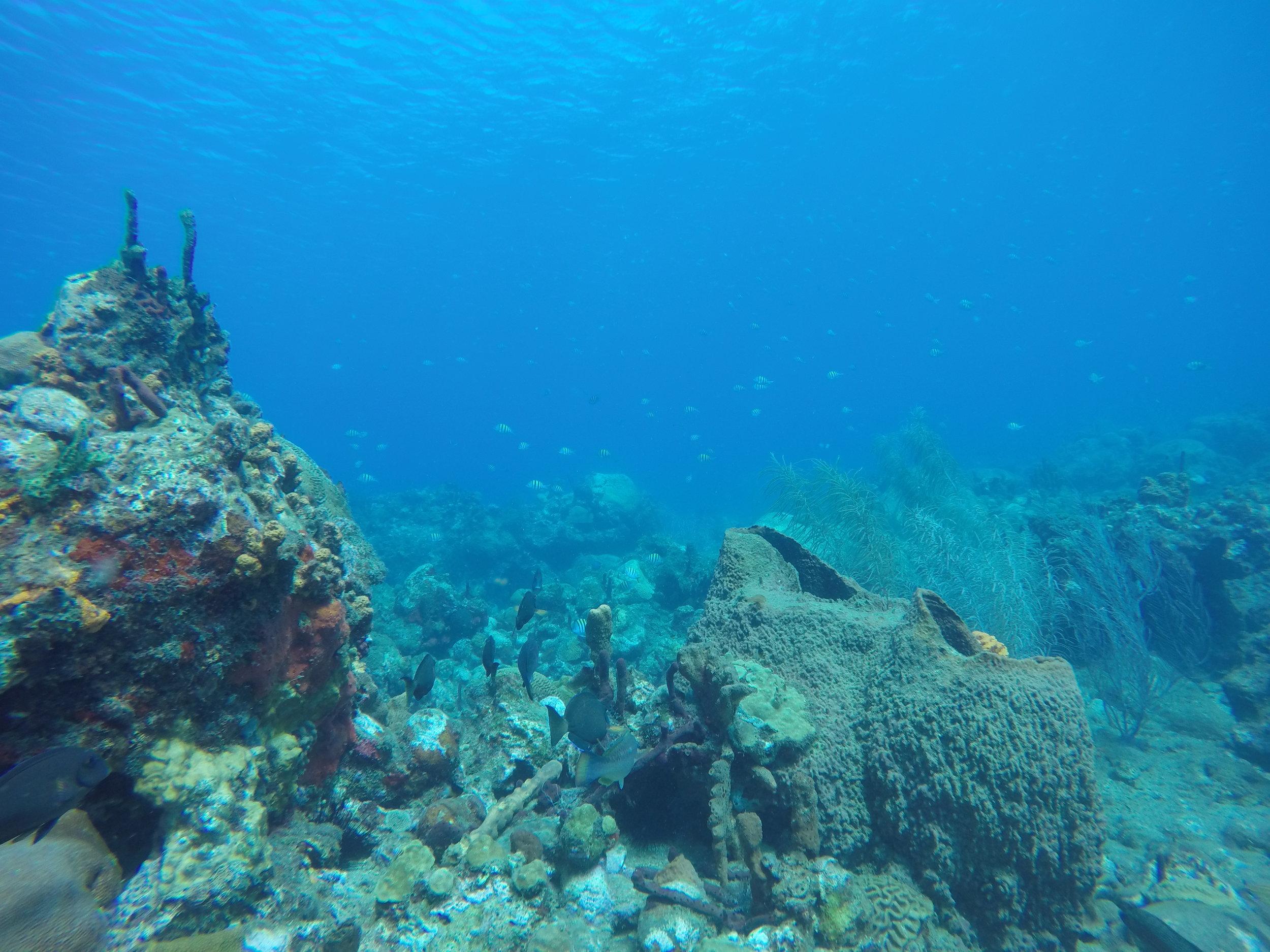 underwater photo toucari bay dominica scuba salt dive.JPG