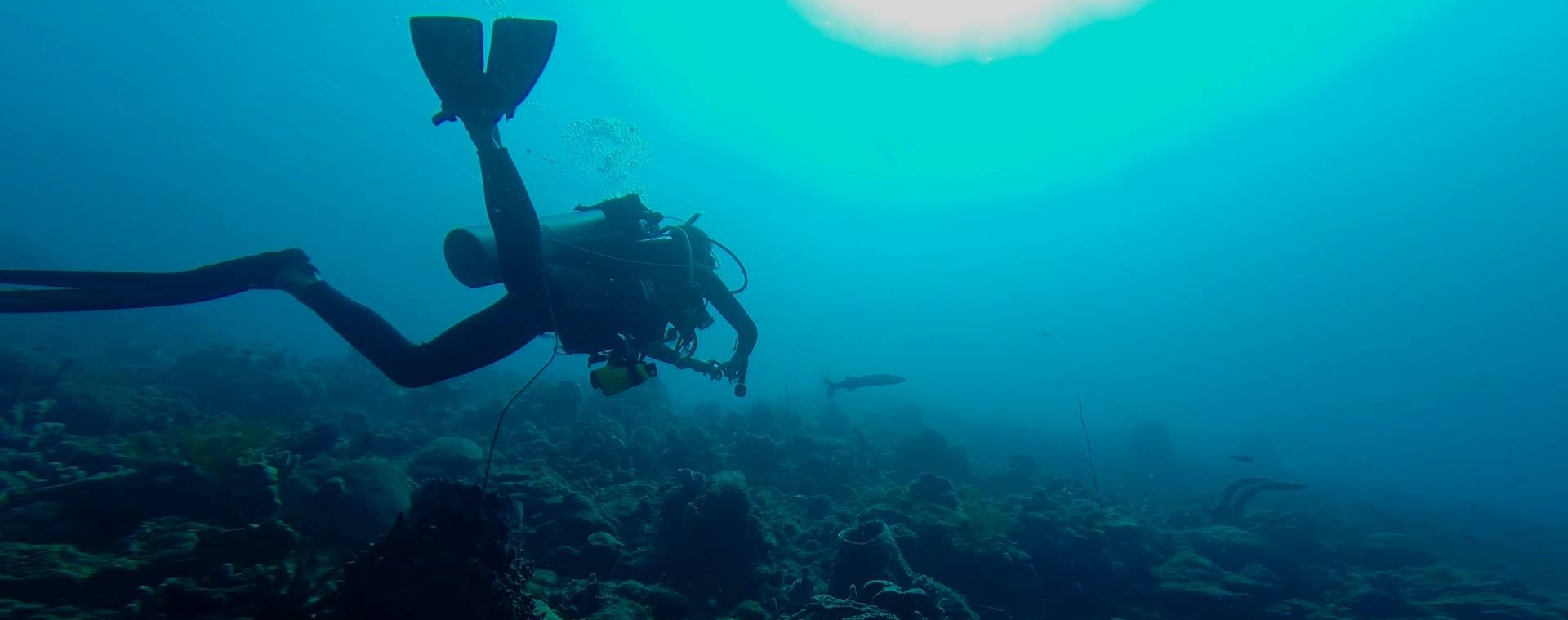 We Live for the Ocean We Dive For the ocean! - salt Menu