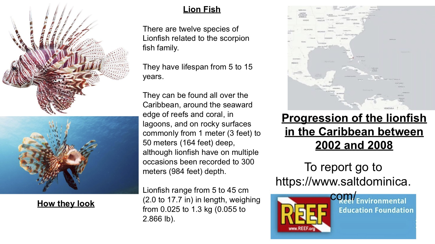 The graphic used during SAM & SHAYLA's lionfish presentation