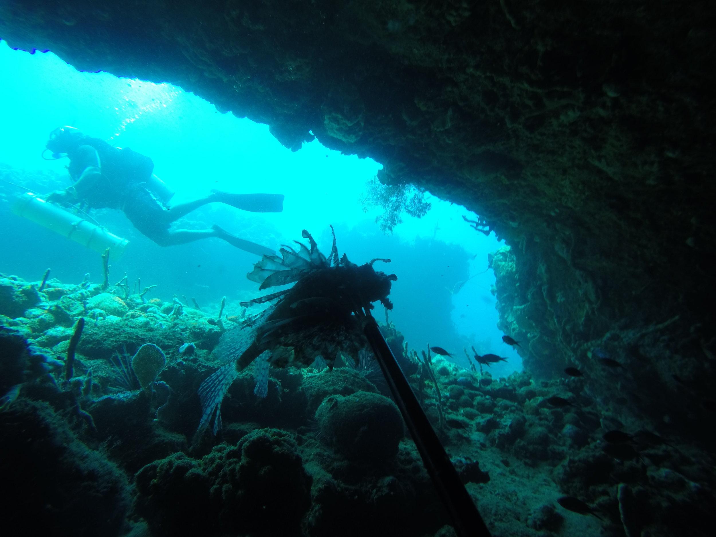 lionfish hunt caves toucari dominica divefest 2019 salt dive.JPG