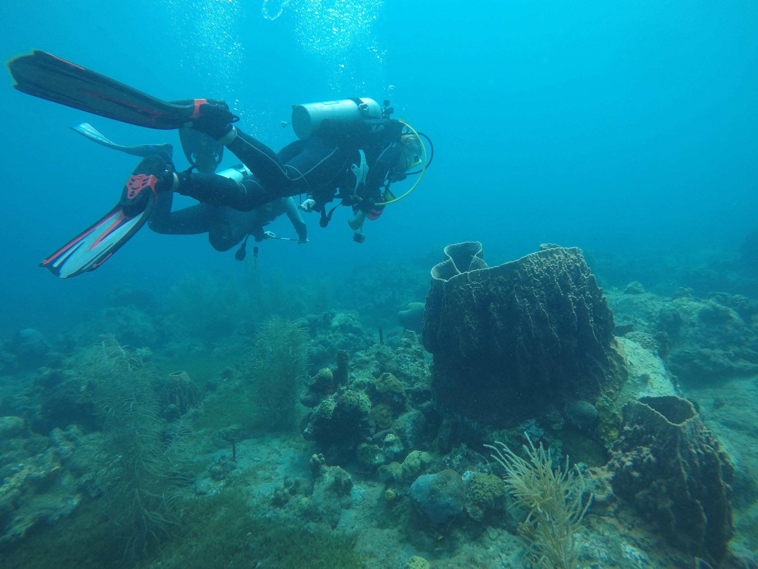 salt dive toucari bay dominica barrel sponge padi reef