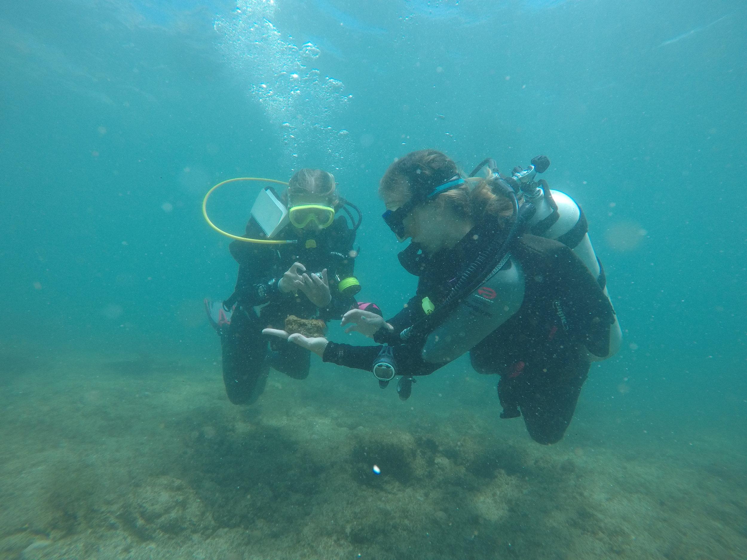 artifact underwater scuba careers salt dominica
