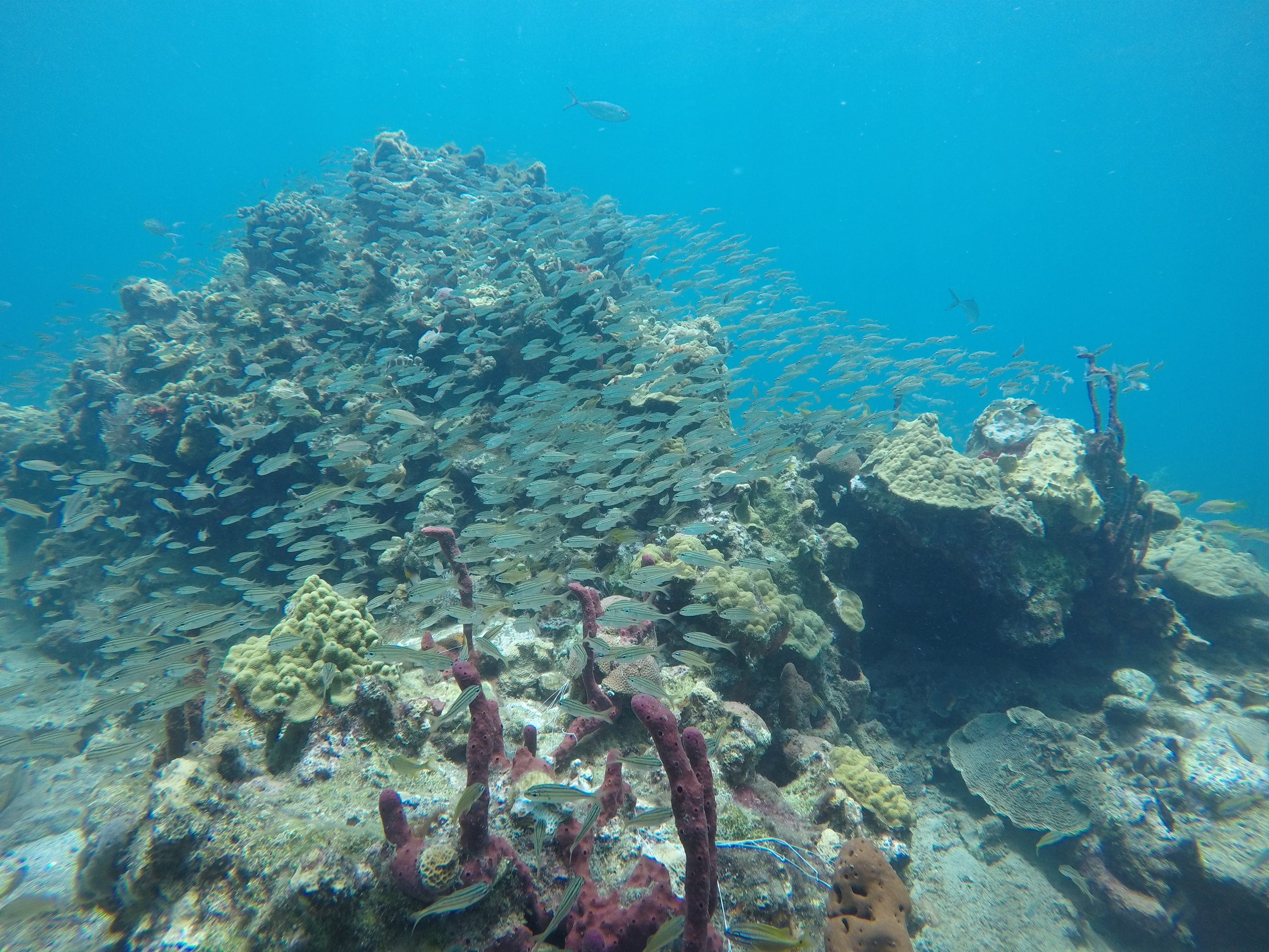 We Protect Underwater Life -
