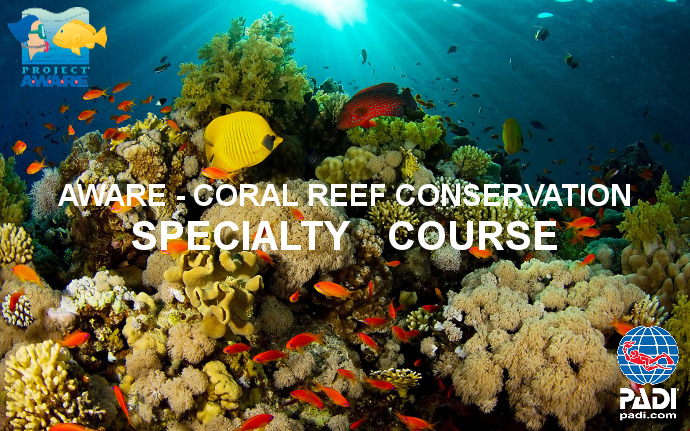coral reef conservation project aware aware week 2019 salt.jpg
