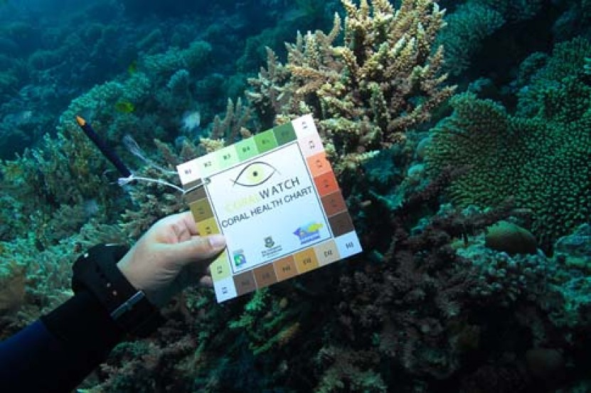 Coral Health Survey - and coral watch specialty certification