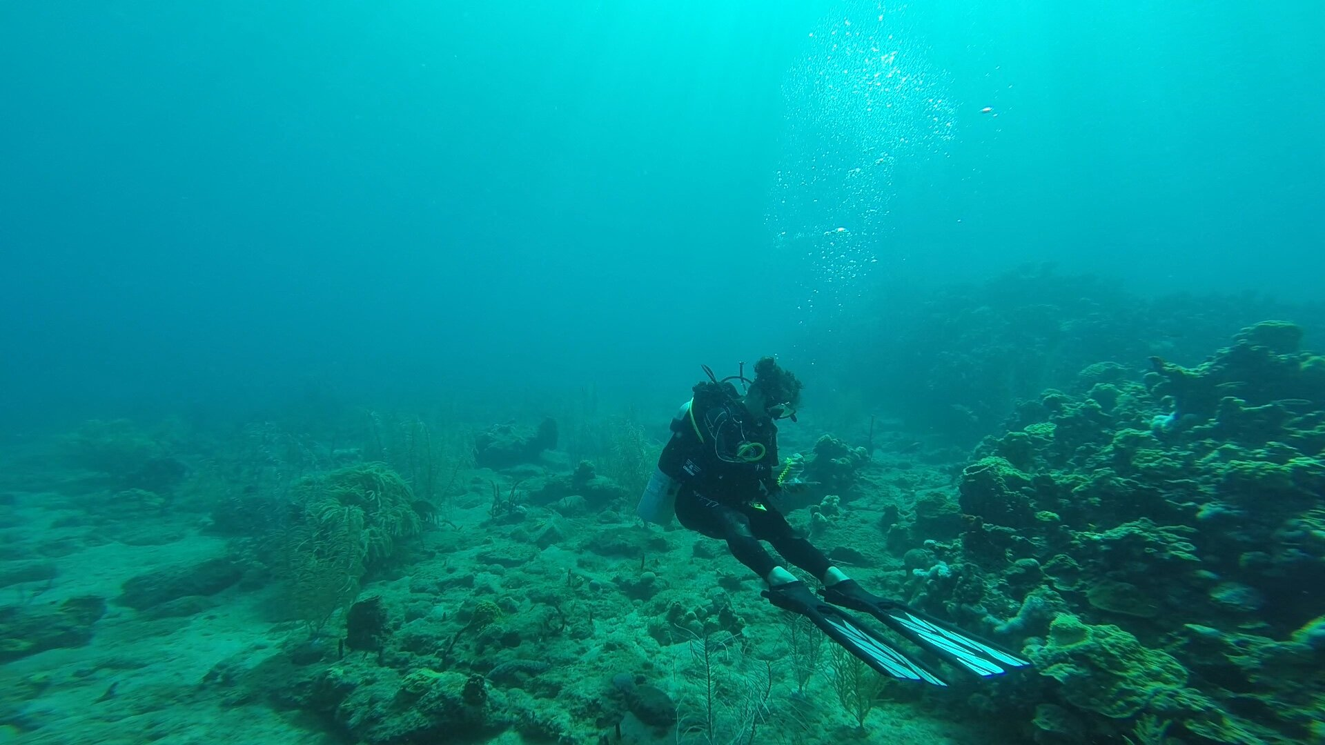 Kayla recording her data on the Coral Watch survey Slate