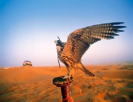 falcon-desert safari- beyond dubai.jpg