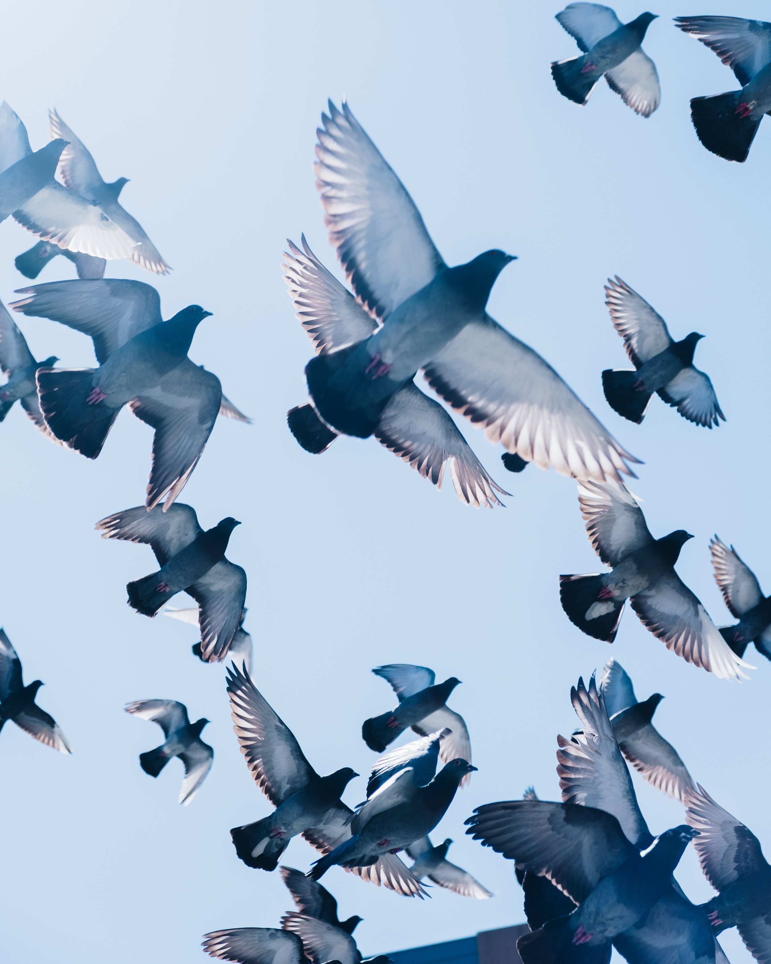 birds-flying.jpg