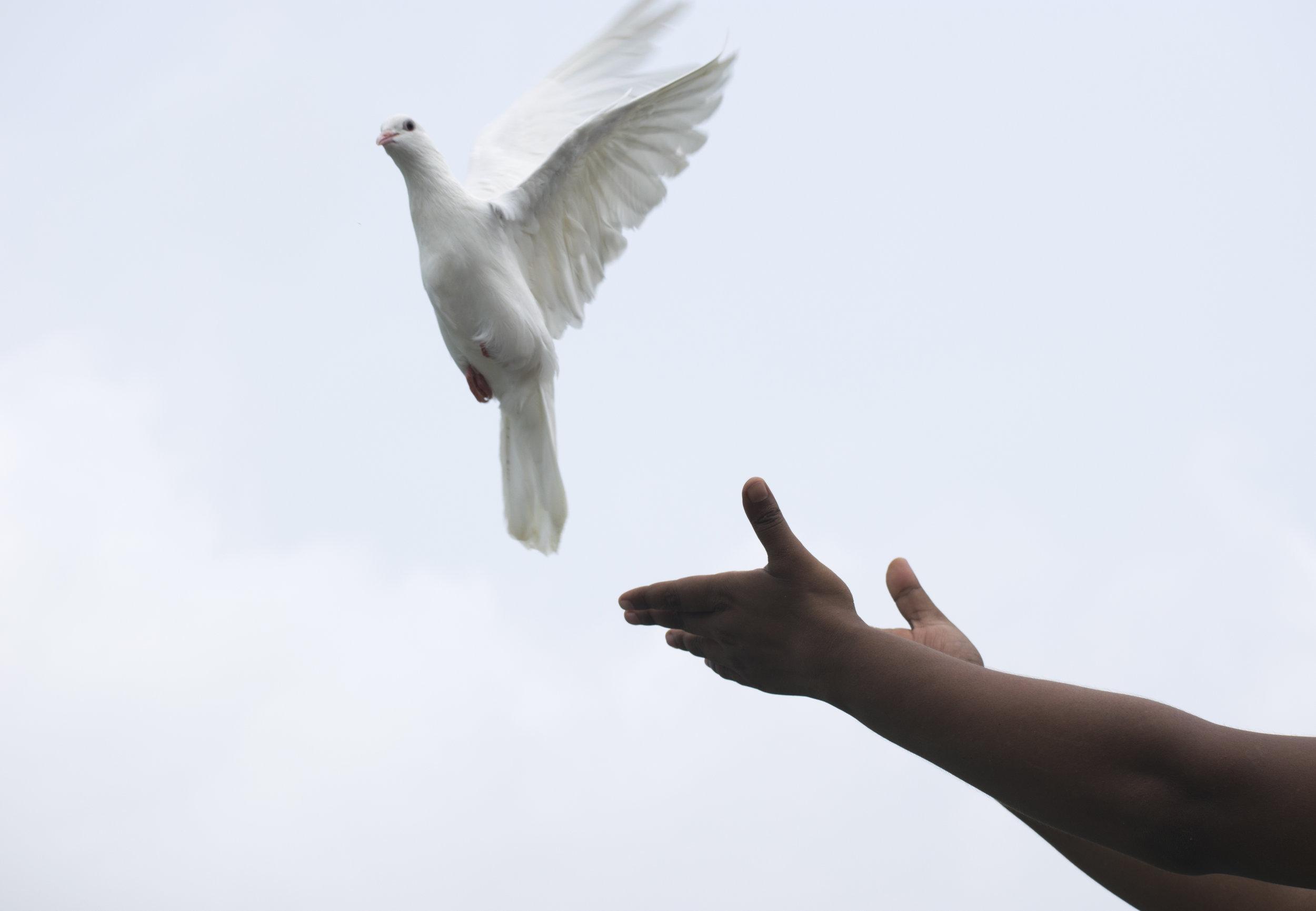 freedom-bird.jpg