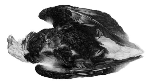 REQIEUM 2012 graphite on paper 42 x 93 inches