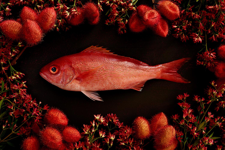 Fish-Red-Snapper-Botanical-0033_original.jpg