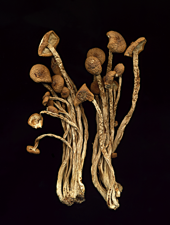 mushrooms2053_original.jpg