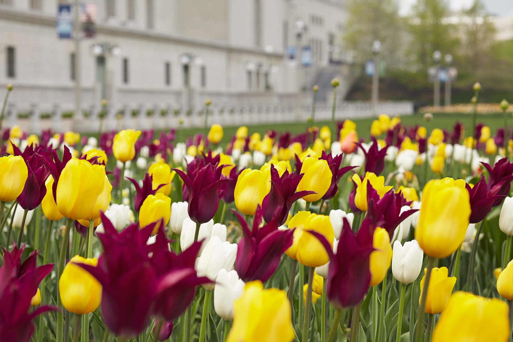 010_Christy_Webber_Soldier_Field_Tulips_MG_7753.jpg