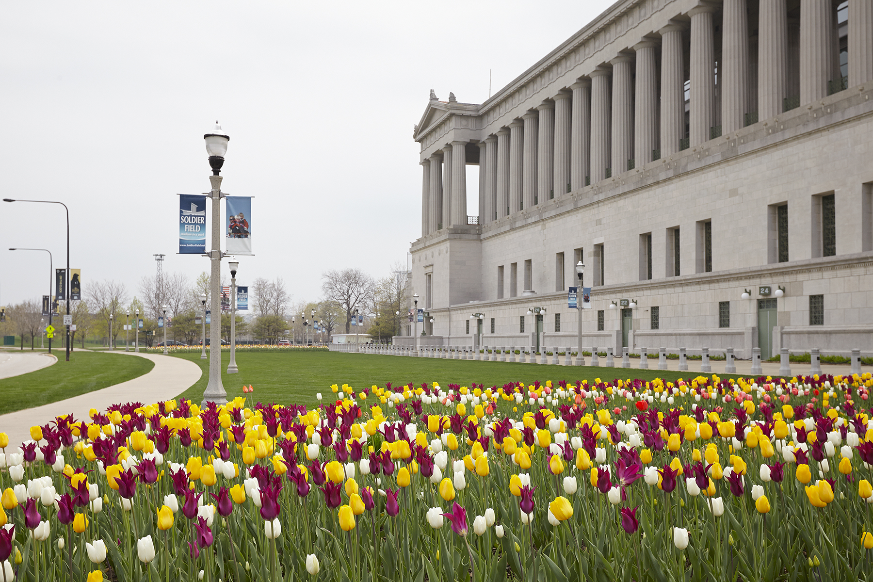 013_Christy_Webber_Soldier_Field_Tulips_MG_7838.jpg