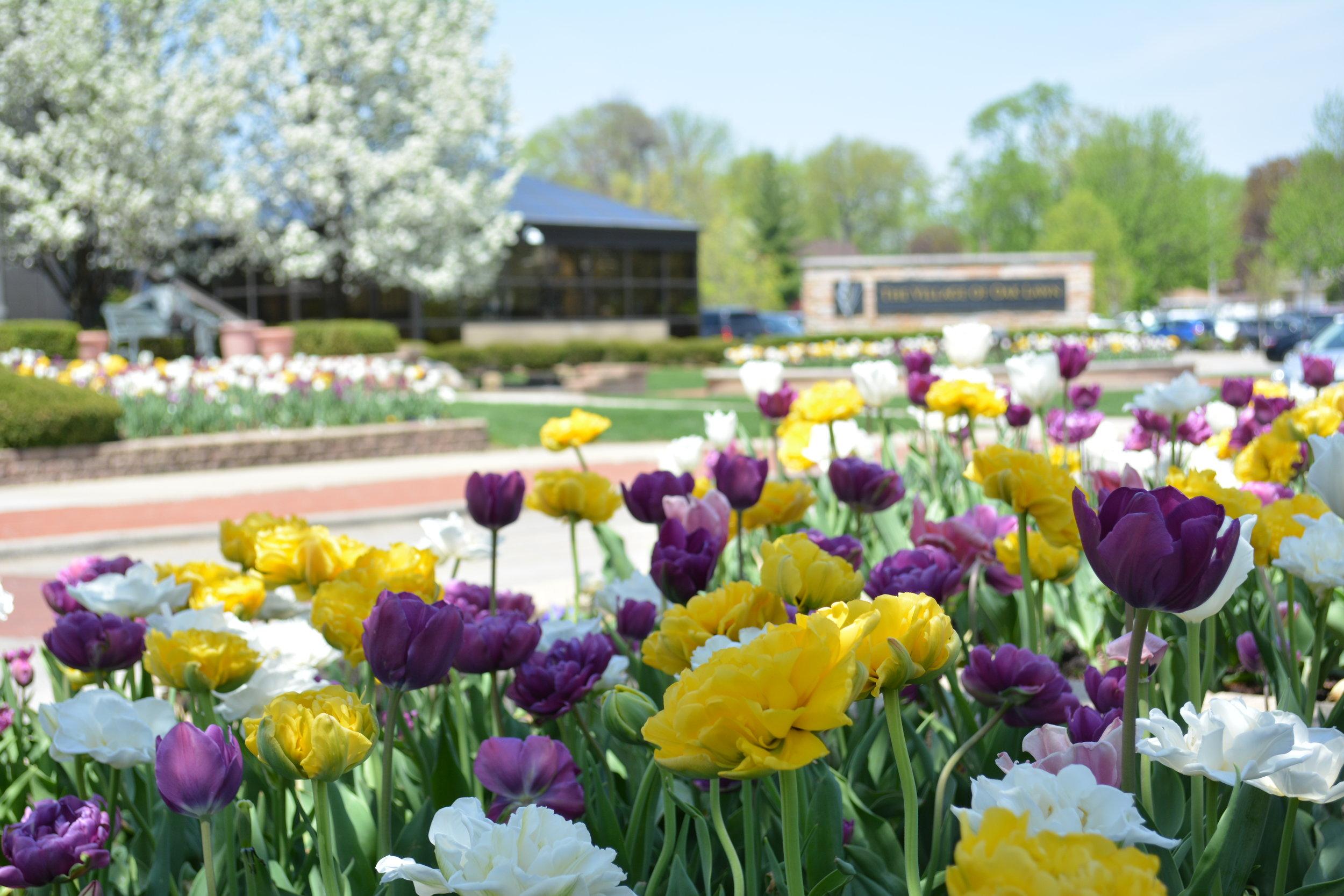 VILLAGE OF OAK LAWN  Landscape Enhancements + Maintenance  Oak Lawn, Illinois