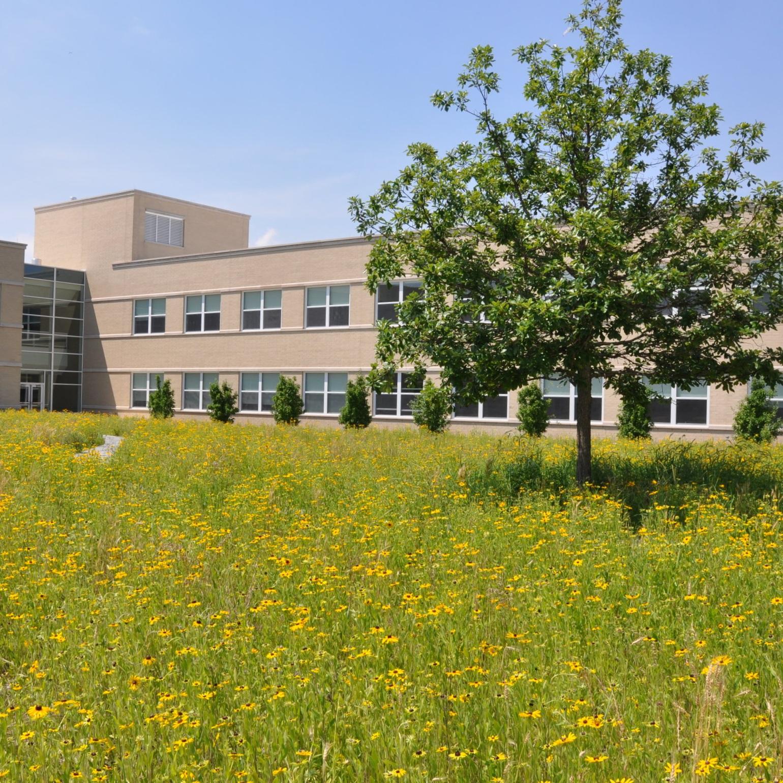 WESTINGHOUSE HIGH SCHOOL  Landscape Construction + Maintenance  Chicago, Illinois
