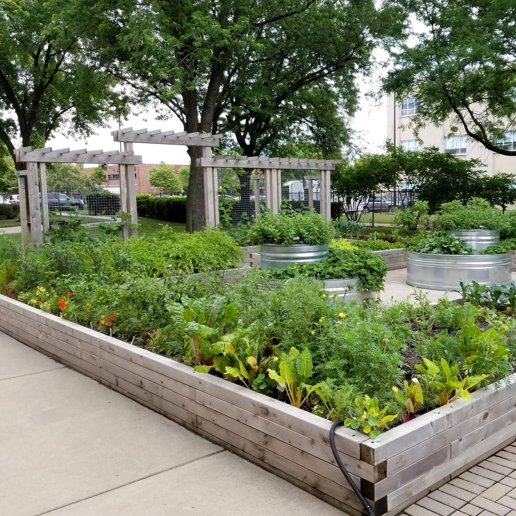 UIC DIETETIC GARDEN  Landscape Design + Build  Chicago, Illinois