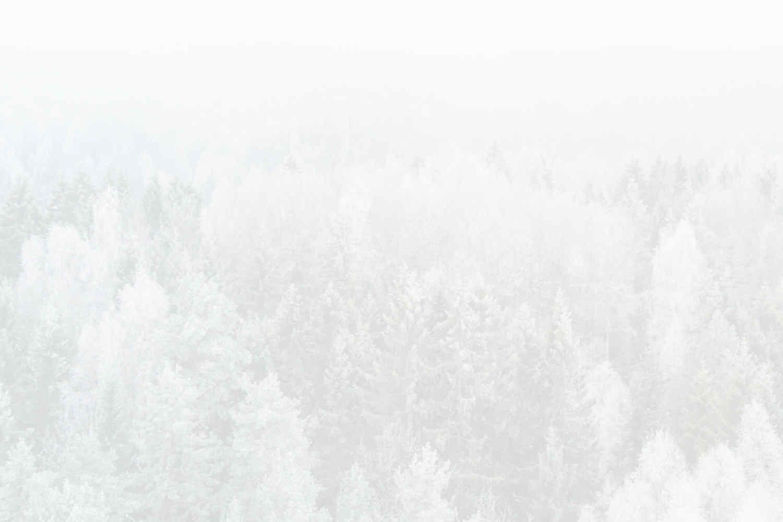 White Vida - Coming December 7