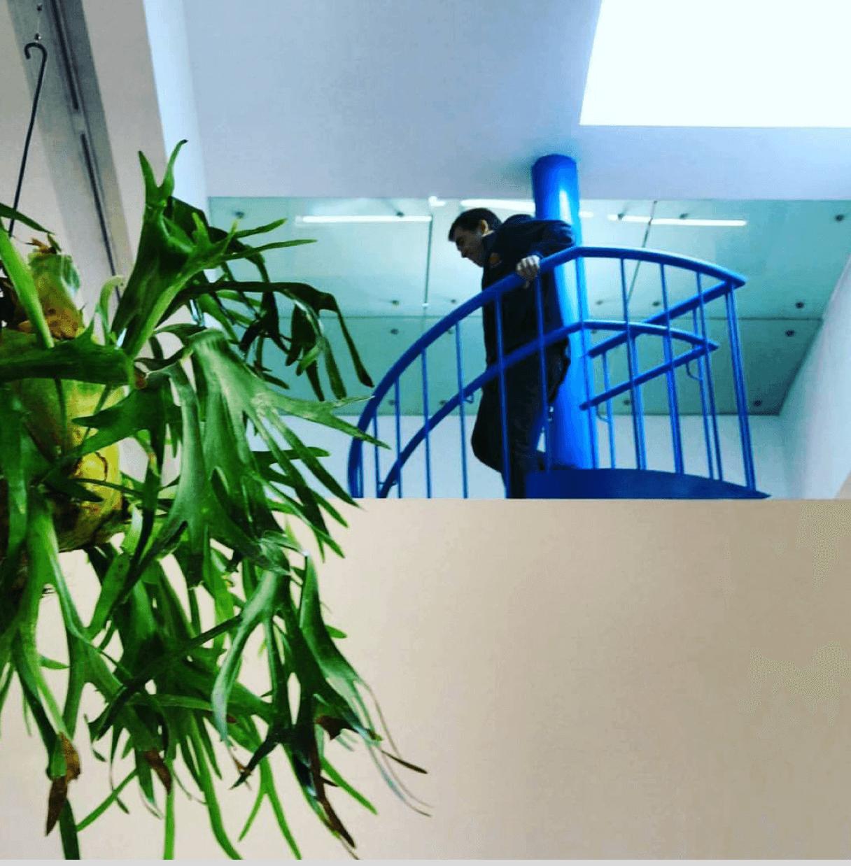 Platycerim bifurcatum  The Water Event (Yoko Ono, Dream Come True) Malba, 2016
