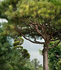 BethDow-Tree-Garden-1-thumbnail.jpg