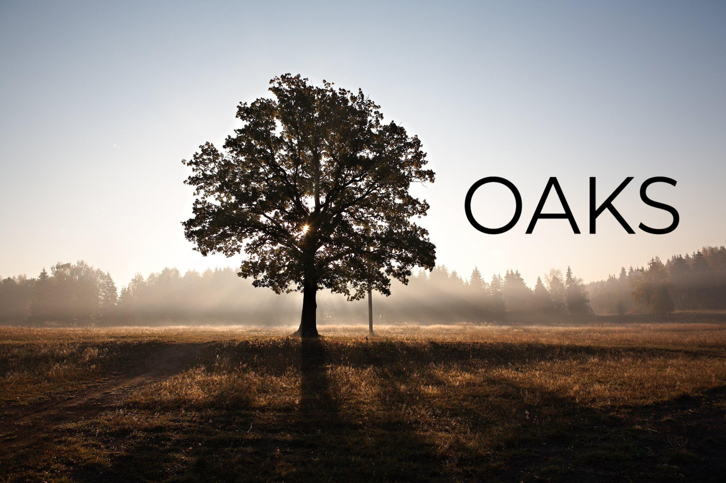 oaks 2.jpg
