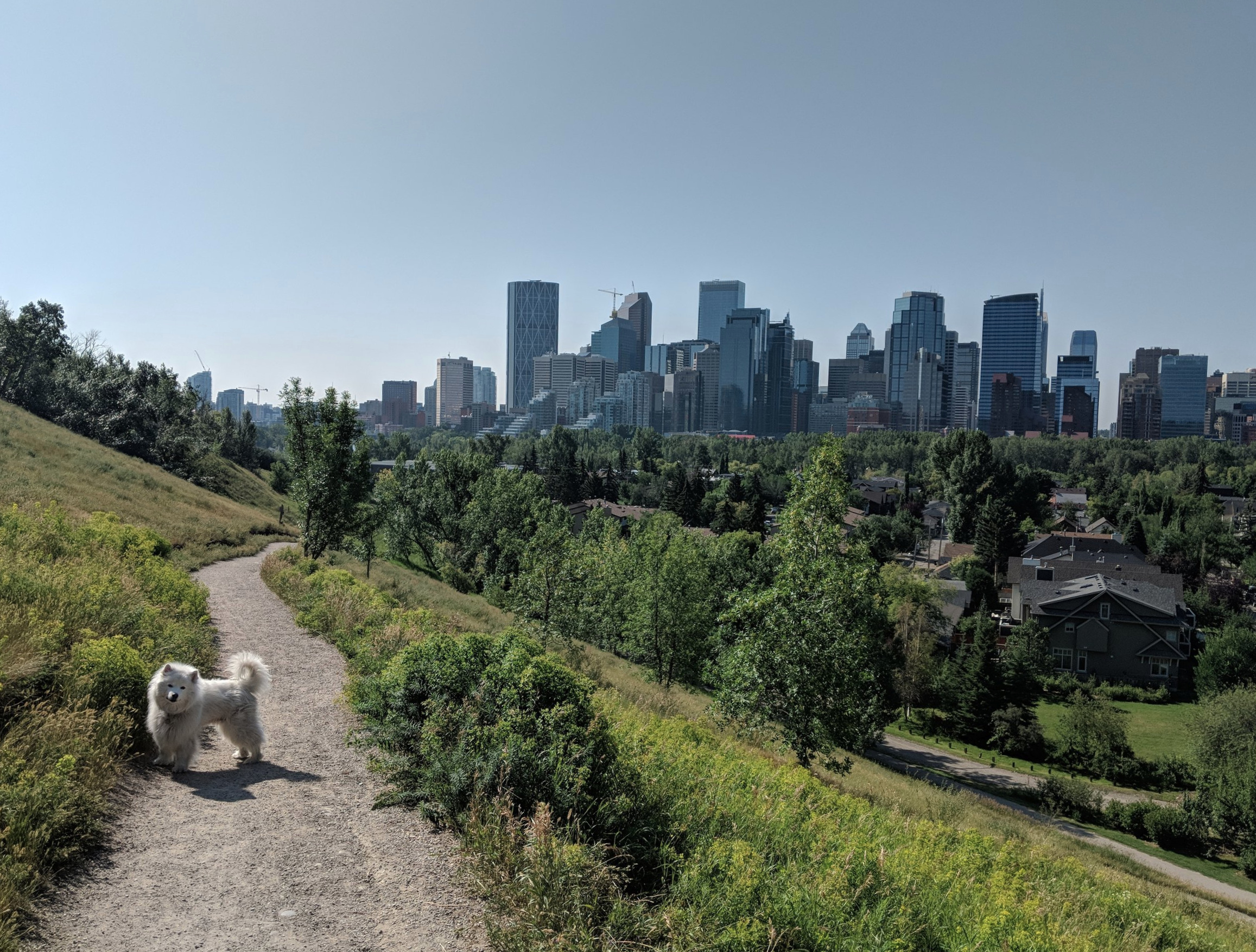 Walking trails + a dense layer of diverse plant species + relationship building with animals = The foundation for Calgary's biophilic culture. July, 2018.
