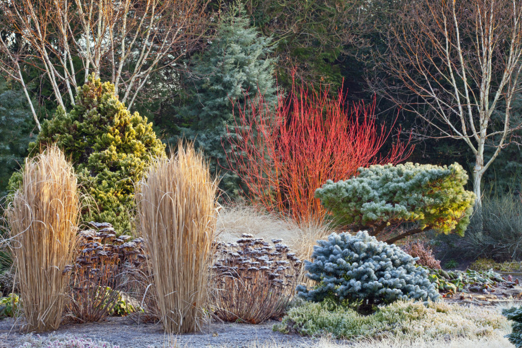 #wintergardengoals. Bressingham Gardens, Norfolk, UK. Retrieved from https://garden-911.com/how-to-design-your-garden-for-winter-interest/garden-seasons/, Feb 2019.