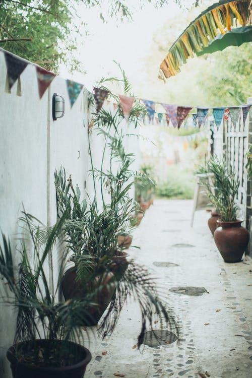 potted plants.jpeg