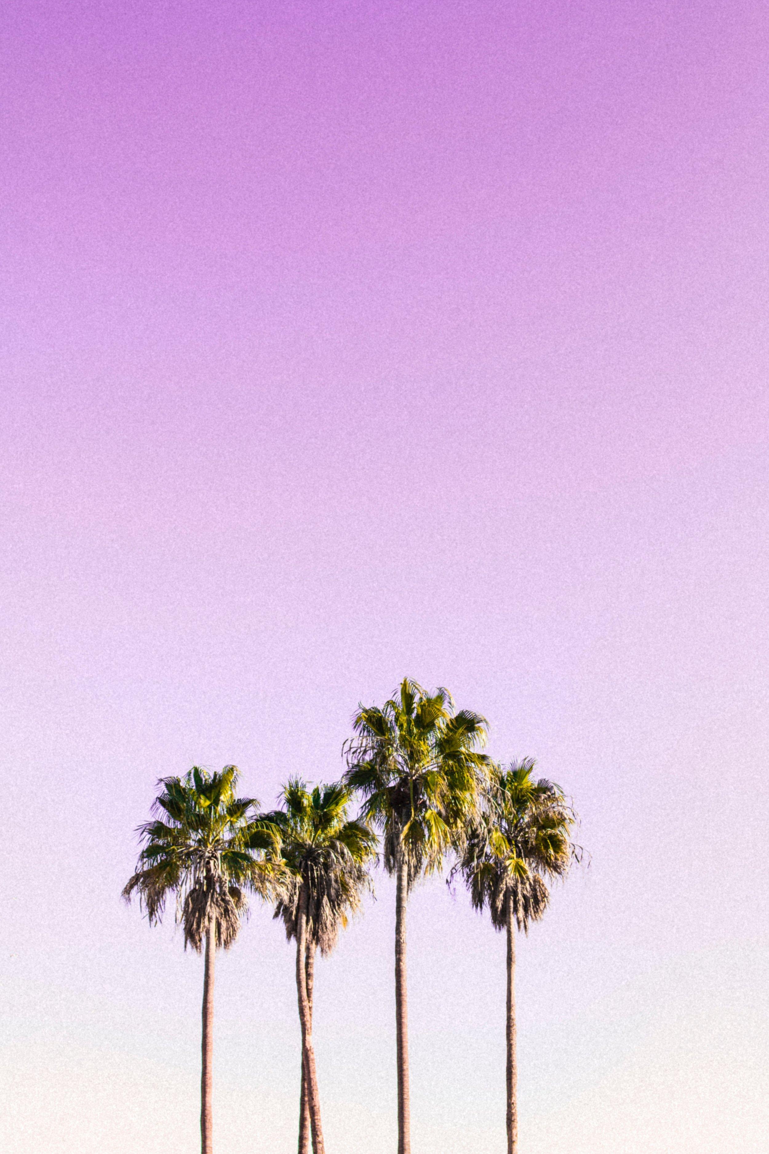 Day Tripping - Shoreline Village - Long Beach