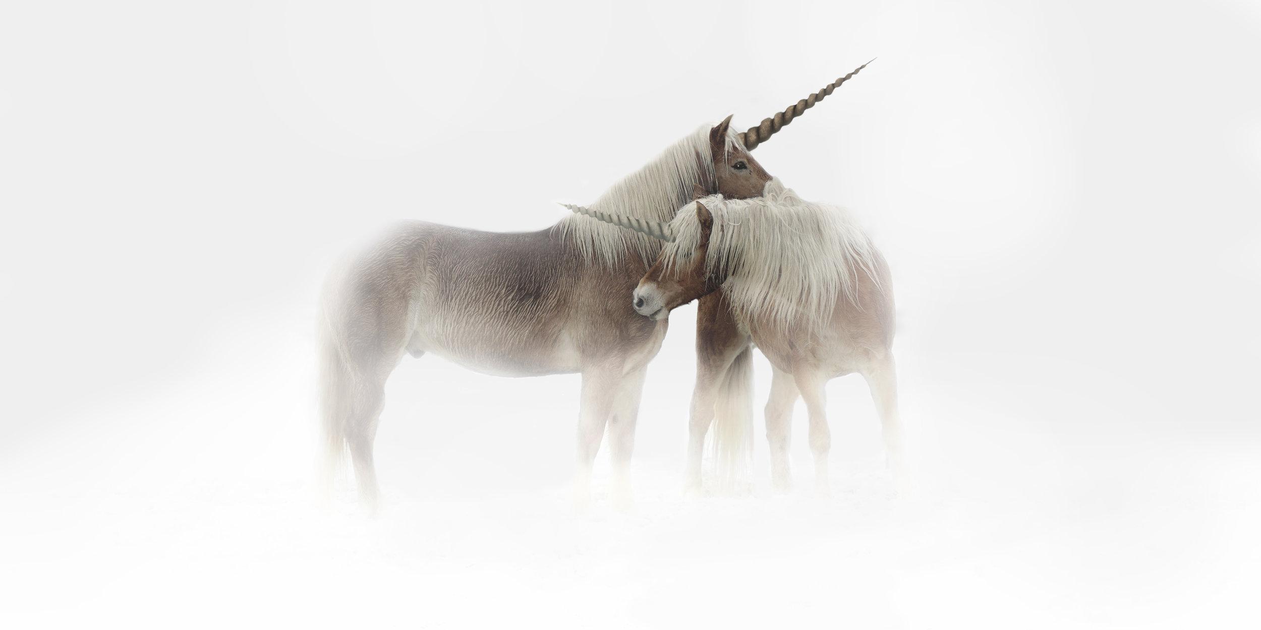 Unicorn: - Myth or Spirit Animal?