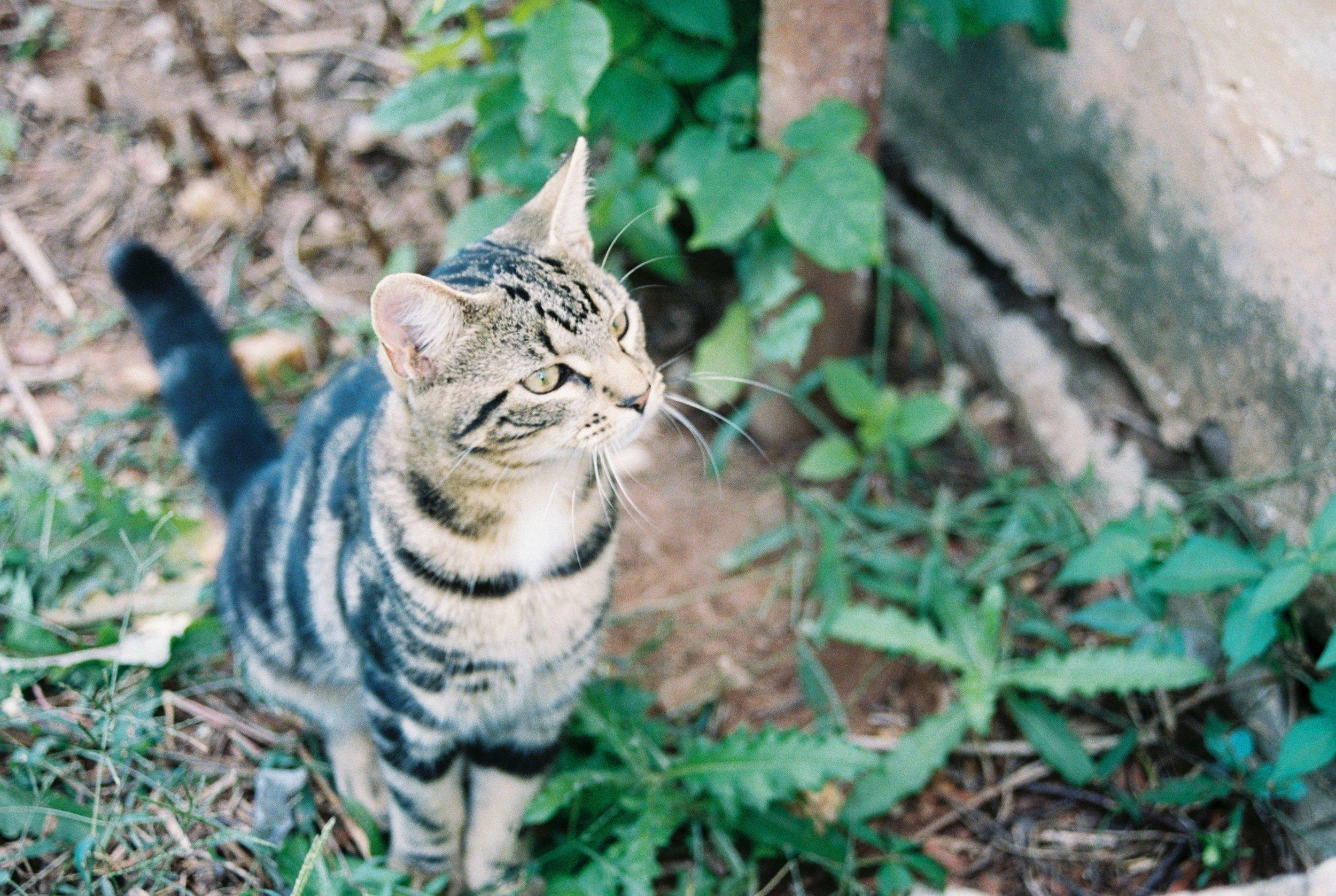 cat-Luis-lopez-photography.jpeg