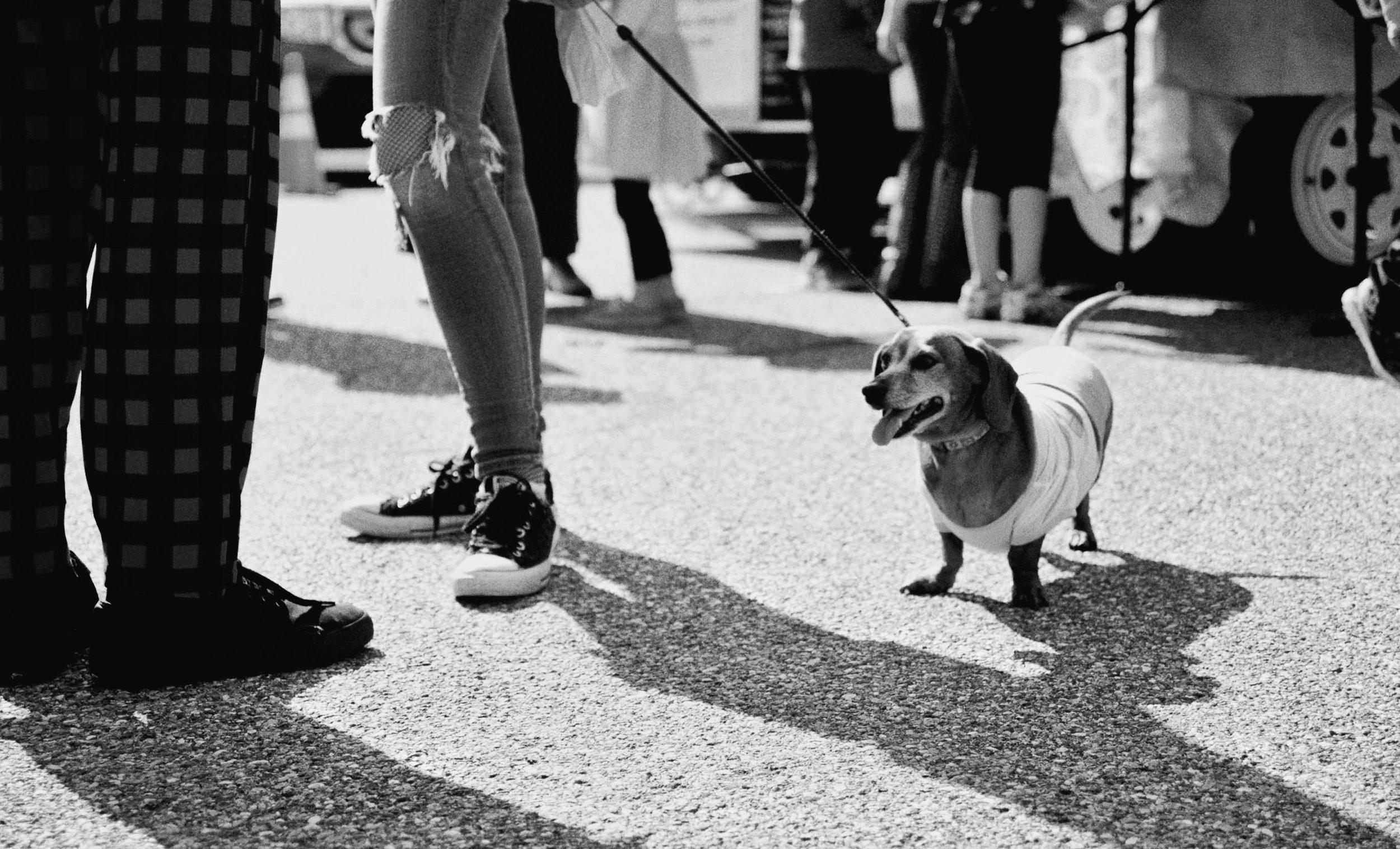 doge-Luis-lopez-photography.jpeg
