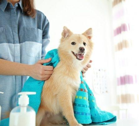 Cute-dog-at-groomer-salon-133952900-560x420.jpg