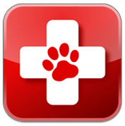 Purchase or put together a pet first aid kit to be prepared in case of injury.