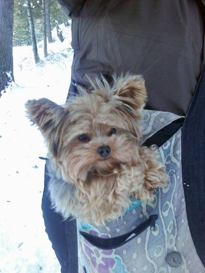 Keeping your pets warm is important to us at Merry Pets. If dogs get cold on walks or hikes, we bundle them up!