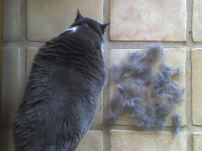 Be prepared to be patient and clean a bit more as pets shed their summer coats, skins and feathers for Fall.